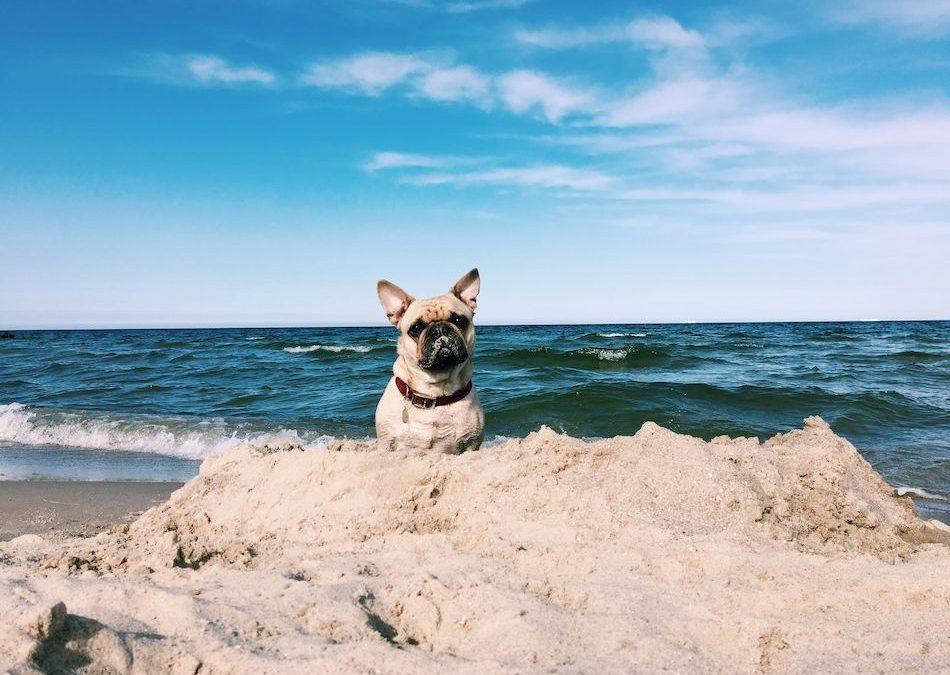 Partir en vacances avec son chien, à quoi faut-il penser?