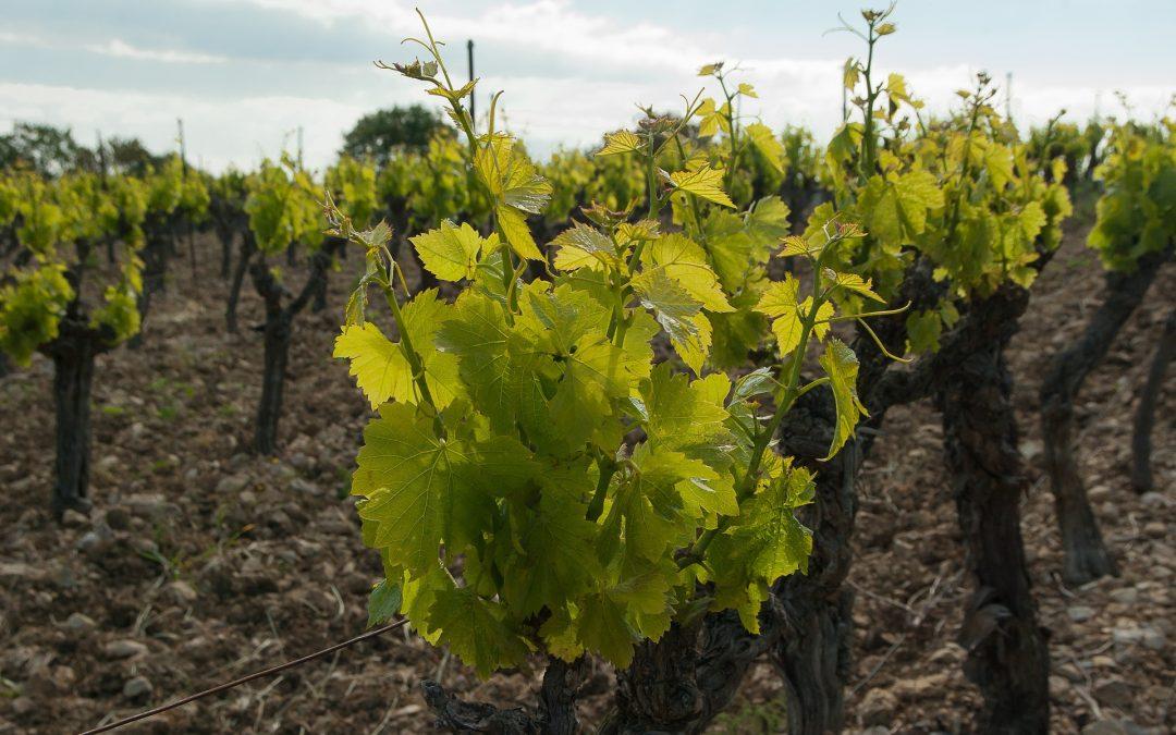 L'achat de vin sur le web en grande augmentation depuis le confinement